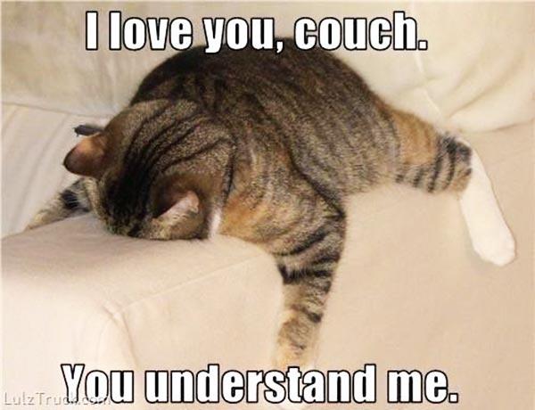 Funny Animal Memes : 24 funny animal memes to make you smile stop the boring