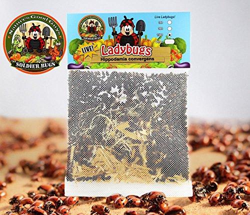 1500 Live Ladybugs