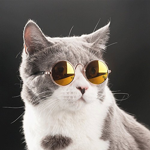 Retro Pet Sunglasses 3