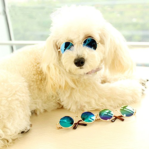Retro Pet Sunglasses 4