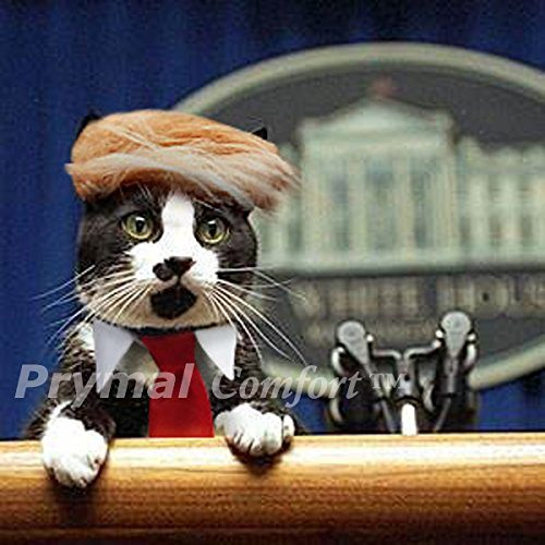 Trump Cat Wig and Tie