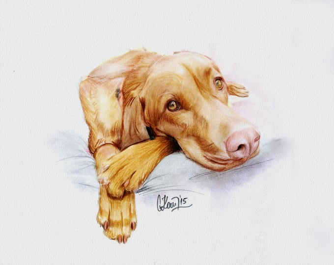 Hand-Drawn Realistic Dog Portrait