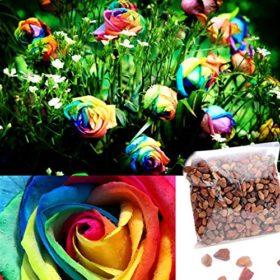 Dealglad-1000Pcs-Beautiful-Rainbow-Rose-Seeds-Multi-colored-Rose-Seeds-Rose-Flower-Seeds-0-2