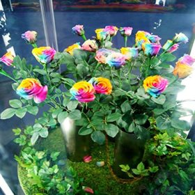 Dealglad-1000Pcs-Beautiful-Rainbow-Rose-Seeds-Multi-colored-Rose-Seeds-Rose-Flower-Seeds-0-4